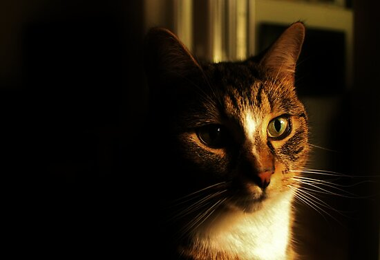 What`s Up Millie Cat by Ladymoose
