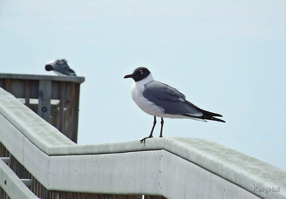 Perched Seagull by nutty1kel