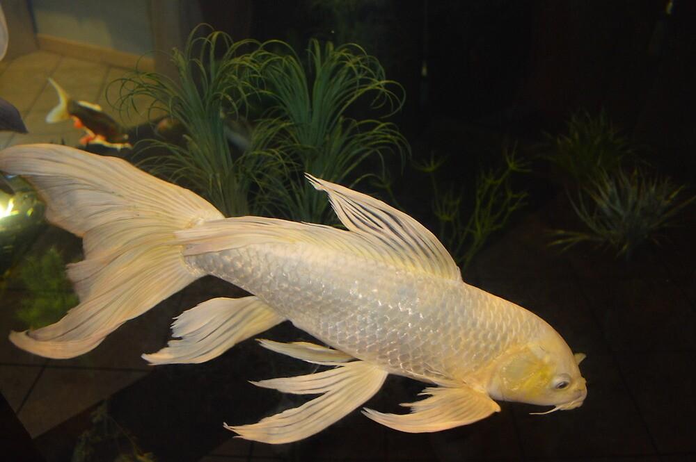 fish by tbaslington