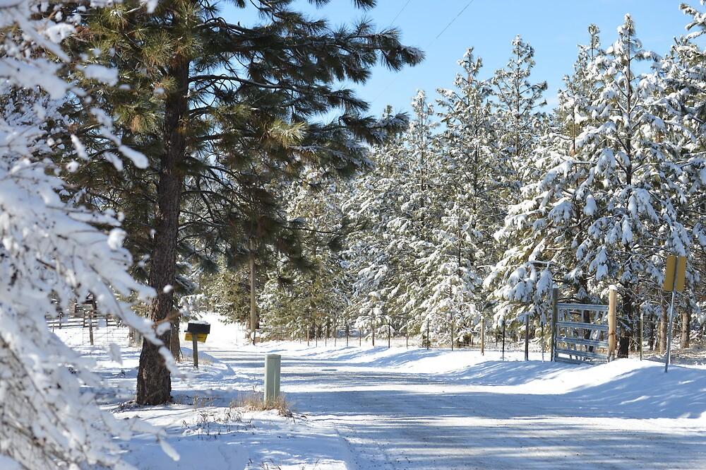 Winter wonderland by tbaslington