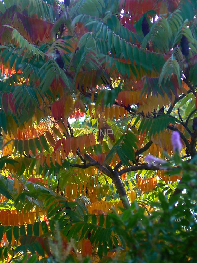 Rousseau Sumac by LCNP