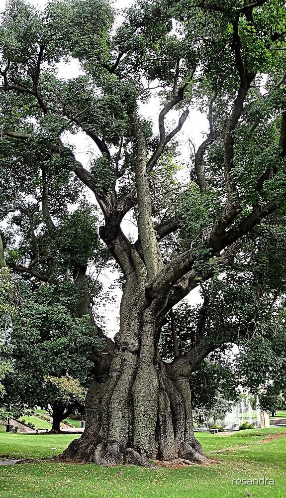 tree by resandra