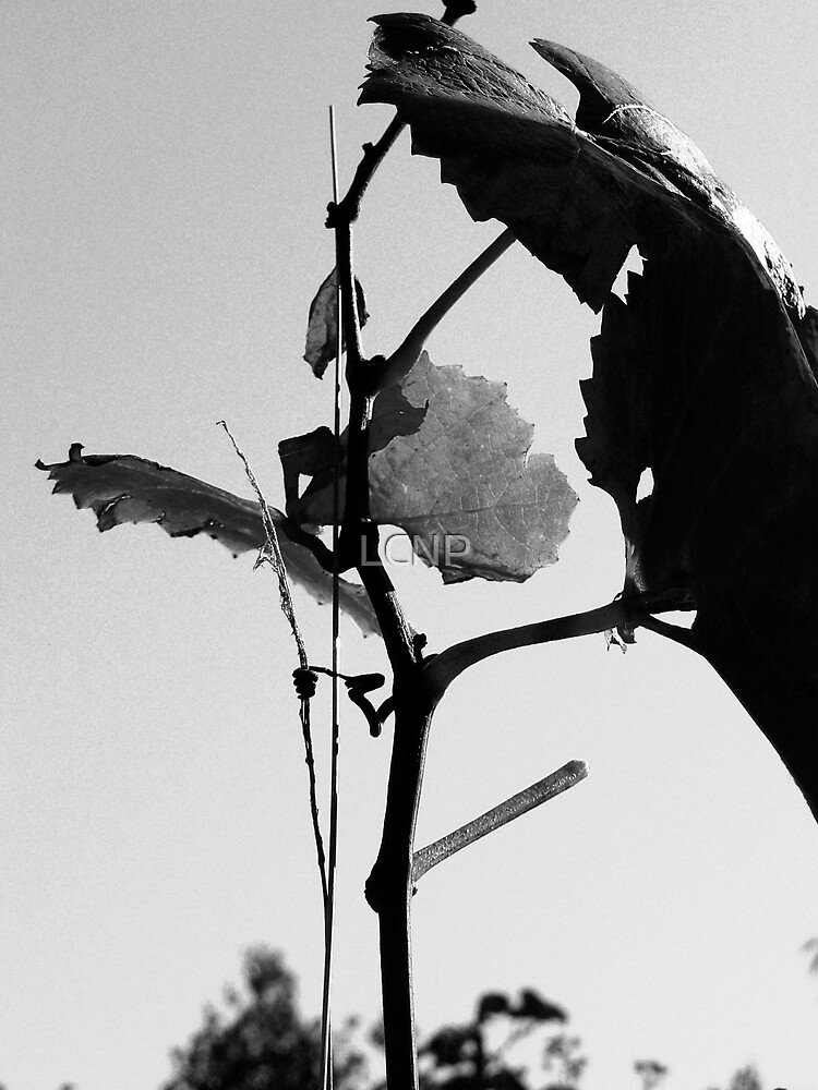 Dying Vine by LCNP