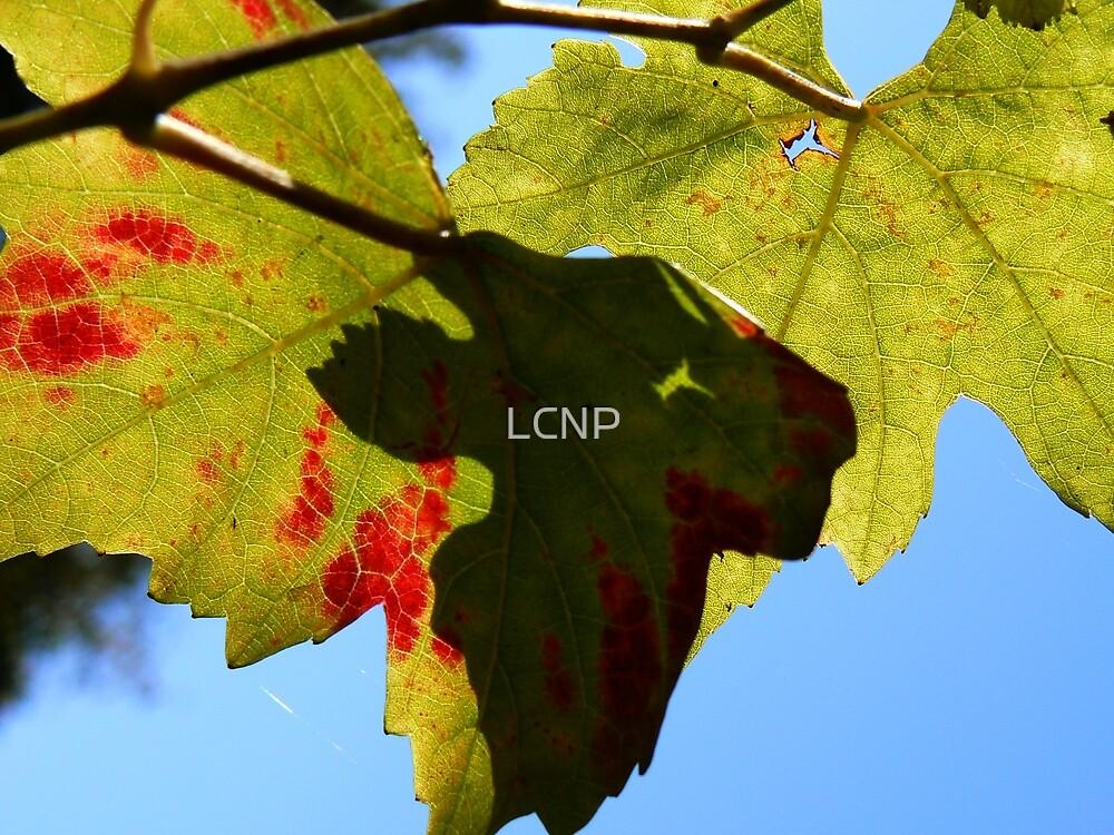 Vine Leaves by LCNP