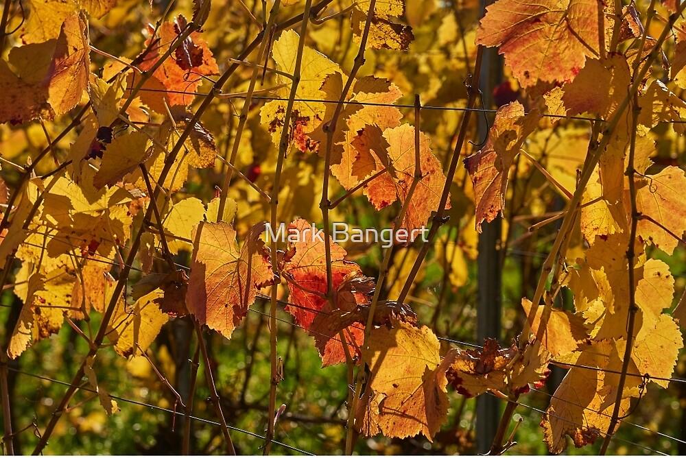 Autumn vines by Mark Bangert