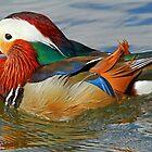 A Mandarin Duck by Anthony Goldman