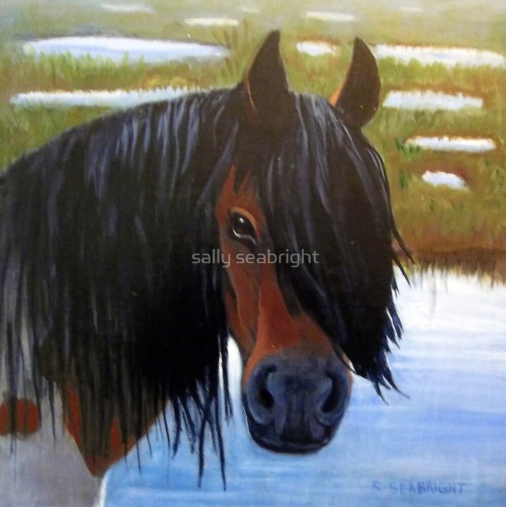 Chincoteague Pony in Marsh by sally seabright