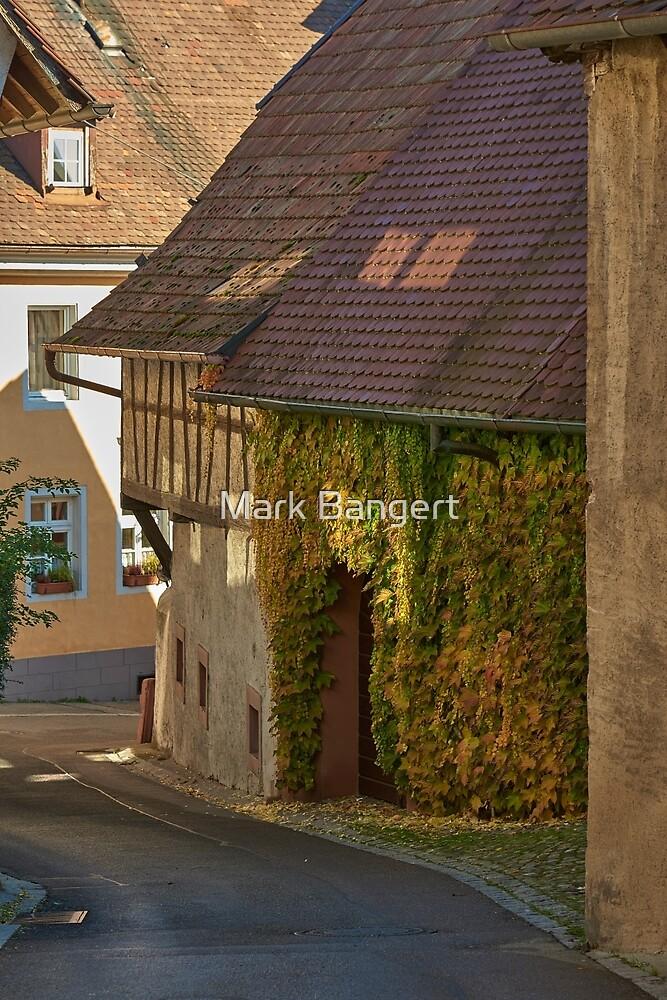 Burkheim, Kaiserstuhl - sunlight detail on vines by Mark Bangert