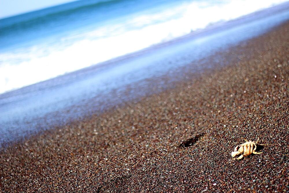 Ocean Krab by Hennyphoto