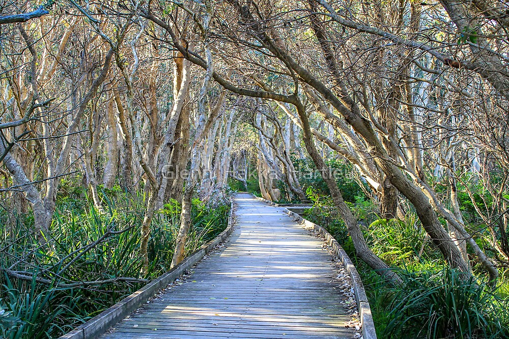 Fingal Boardwalk by Glenn 'Hakka' Hartley