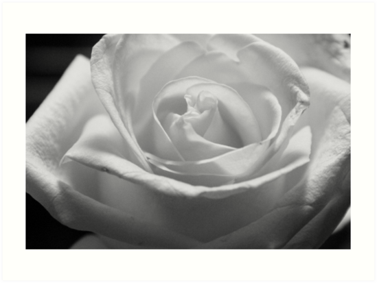 The Rose by Angel Wright