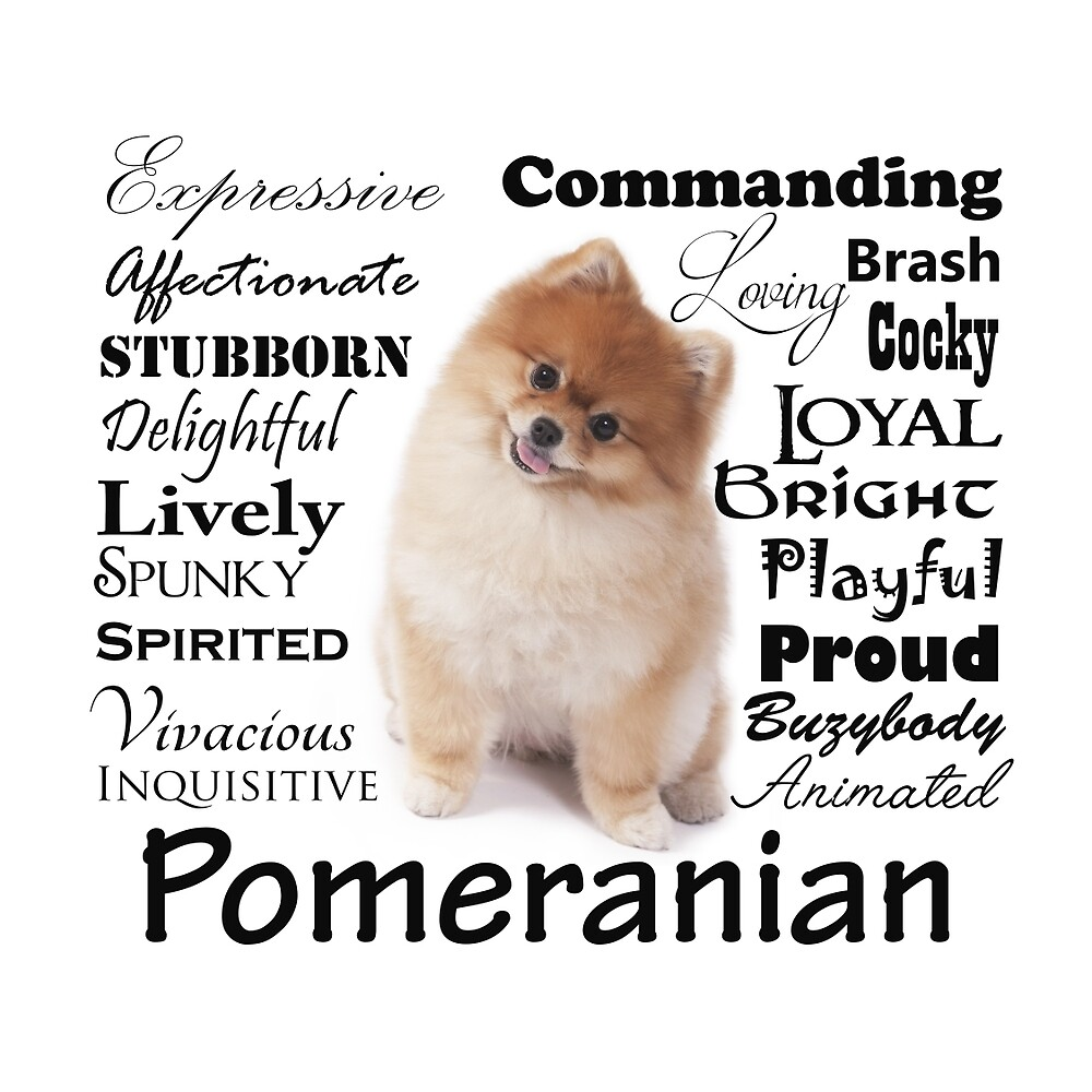 Pomeranian Traits and Personality by DogLove