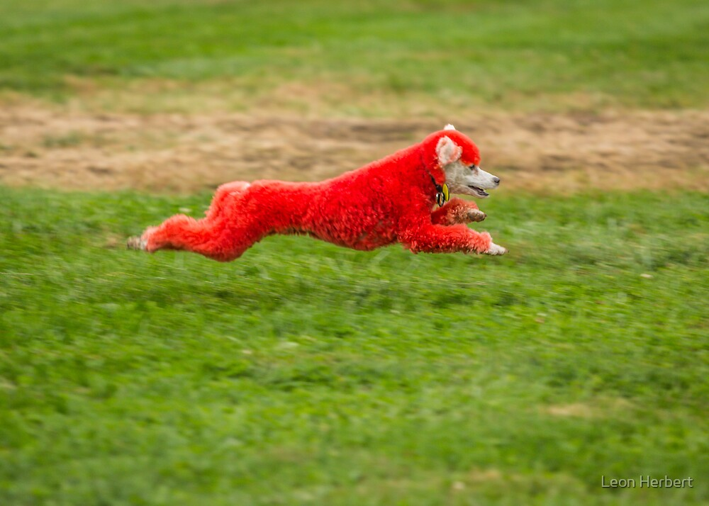 Spooky Pooch at full speed by Leon Herbert
