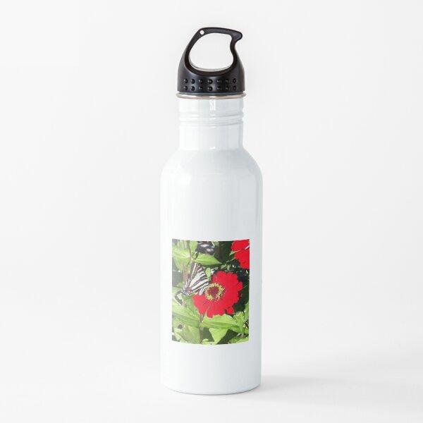 Butterfly on Gerber Daisy  Water Bottle