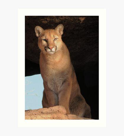 Mountain Lion Cub ~ Cruz Art Print
