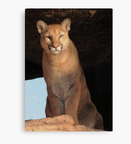 Mountain Lion Cub ~ Cruz Canvas Print