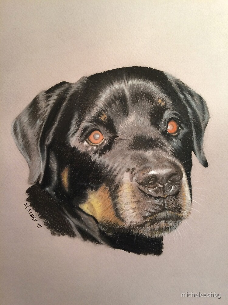 Ruby - Rottweiler by micheleashby