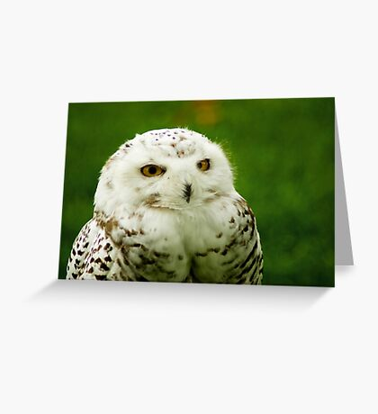 Snowy Owl - a penny for your thoughts Greeting Card