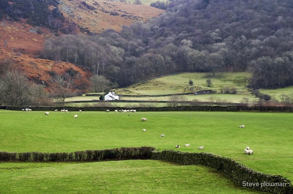 A distant cottage by Steve plowman
