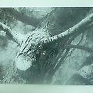 Texan Tree by carpetdiamond