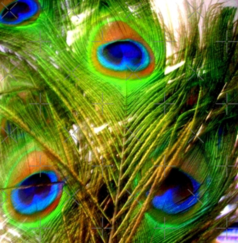 Peacock Feathers by Artisimo