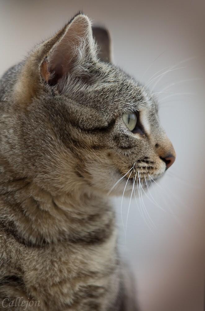 Cat portrait  by JOSECALLEJON