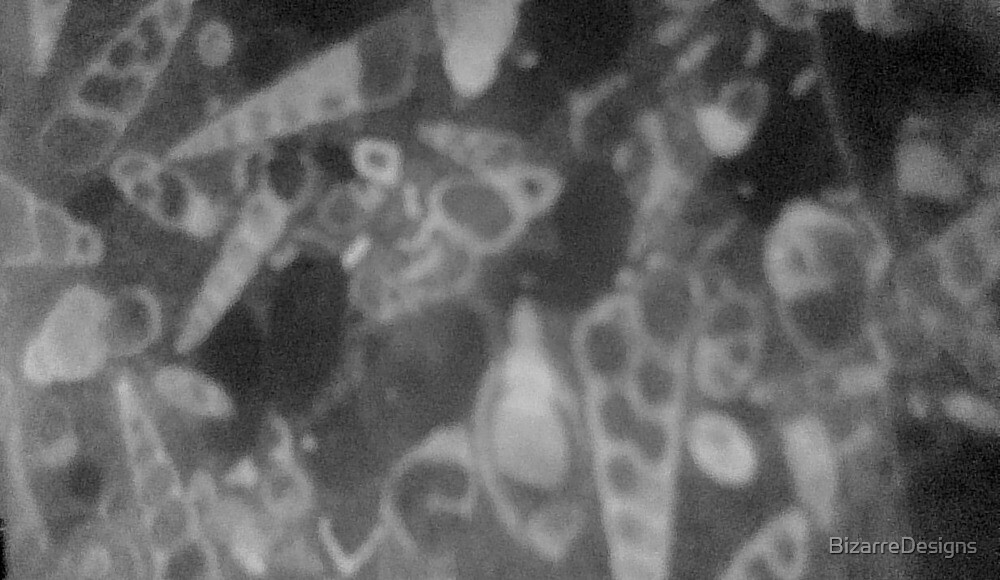X-ray Shells by BizarreDesigns