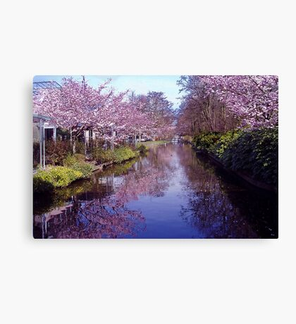 Blossoms in the Keukenhof Canvas Print