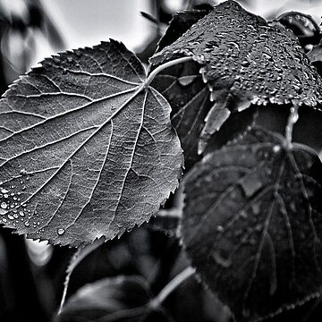 Raindrops After The Storm by learningcurveca