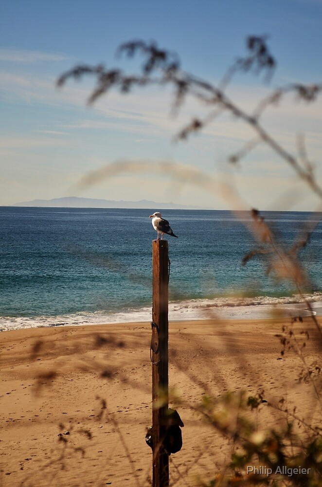 Seagull on a Post by Philip Allgeier