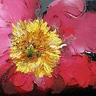 Peonia rosso e nero 1207 by Nicoletta Belletti