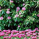 Spring in pink by Arie Koene