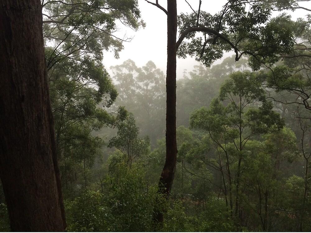 Quiet Forest by PandaPandaBear