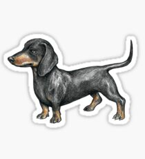 Black and Tan Dachshund Sticker