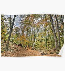 Walking Throw Jordan's Beech Wood Poster