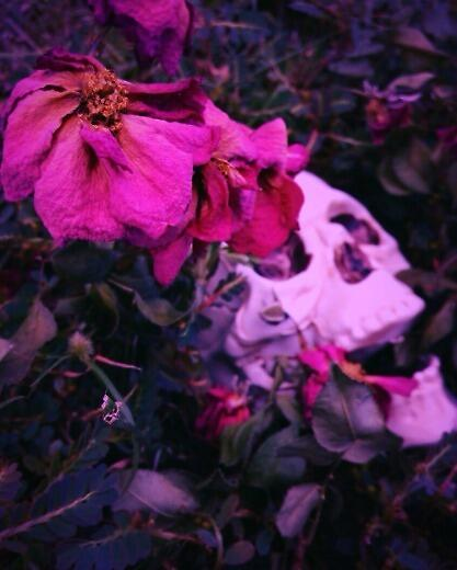 Dead Flowers by Cierra Hales