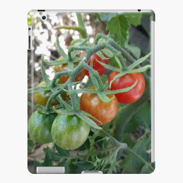 Cocktail Tomatoes in Garden iPad Snap Case
