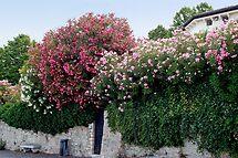 Wall+flowers by Arie Koene