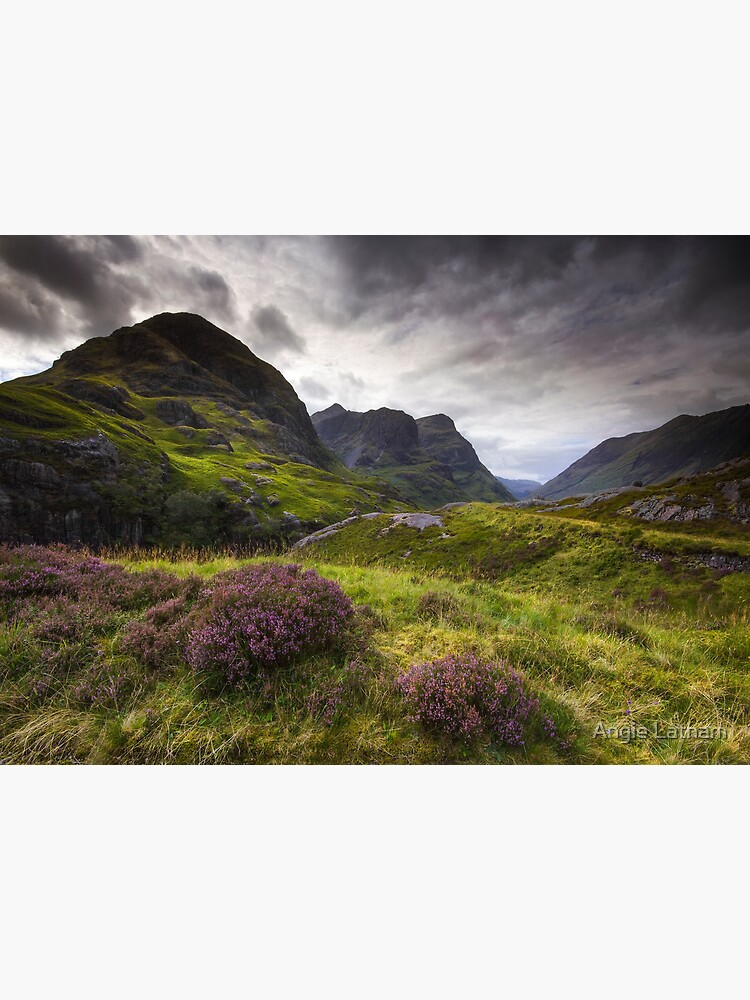 Scotland - Glencoe Heather by AngelaBarnett