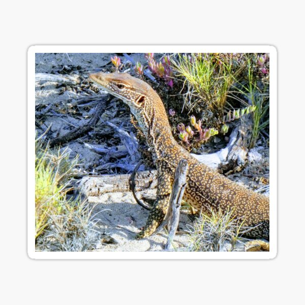 Perentie Australian Lizard Sticker