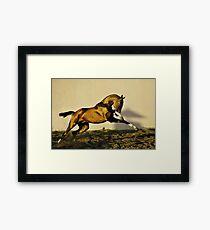 Throw of gold hawk Framed Print