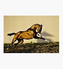 Throw of gold hawk Photographic Print