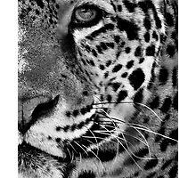 Into The Wild Photographic Print