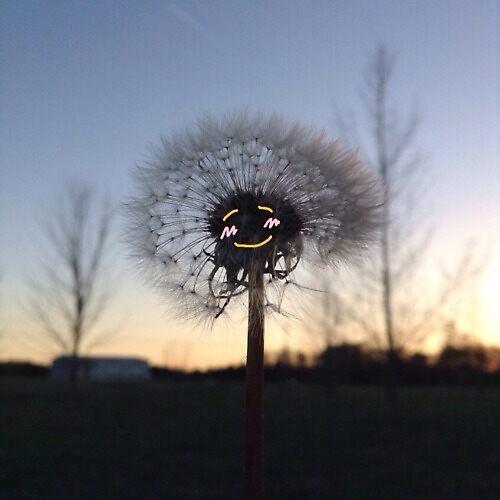 Dandelion by Cierra Hales