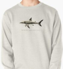 Carcharodon carcharias by Amber Marine, great white shark illustration, art © 2015 Pullover
