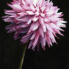 Lone Dahlia by Ken Powers
