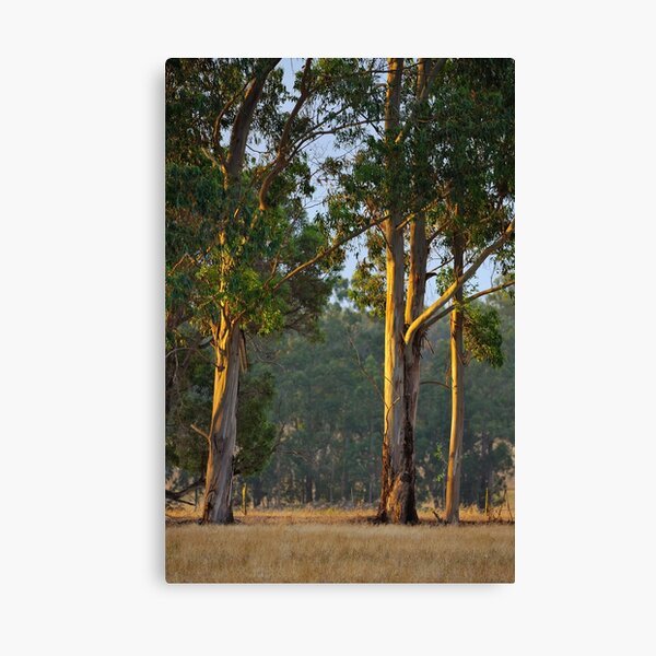 Guards of Evening Canvas Print