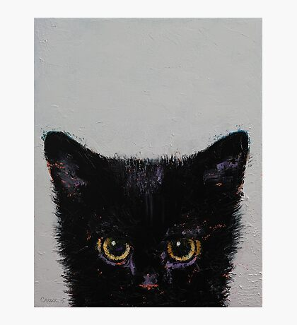 Black Kitten Photographic Print