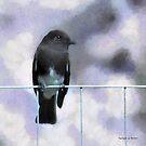 Little Black Bird by Rhonda Strickland