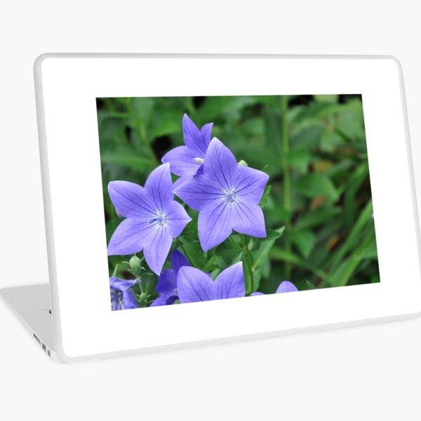 Violet Balloon Flowers Laptop Skin